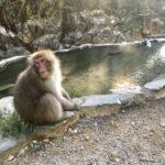 猿も、僕も、全裸。善光寺、そして地獄谷野猿公苑へ。~日本一周 原付バイク旅10日目~