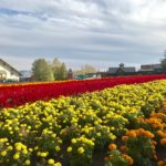 人生初、ライダーハウス。富良野の花畑とラベンダーソフト~日本一周 原付バイク旅 21日目~