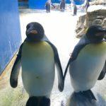 長崎ペンギン水族館と冷たいもの〜日本一周 125日目~127日目〜